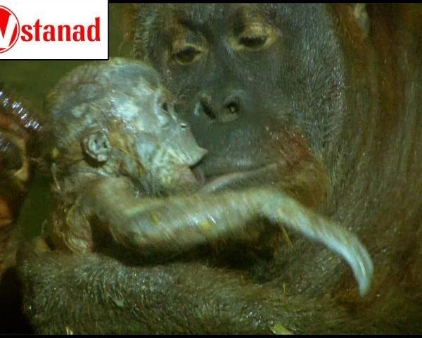 دانلود مستند شگفتیهای تولد حیوانات - 2 از مجموعه شگفتیهای تولد حیوانات