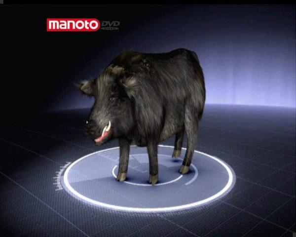 دانلود مستند خوک غول پیکر از مجموعه جستجوی هیولا