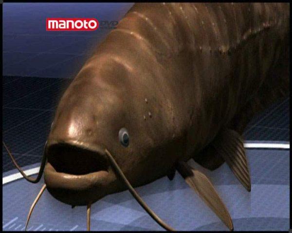 دانلود مستند ماهی غول پیکر از مجموعه جستجوی هیولا