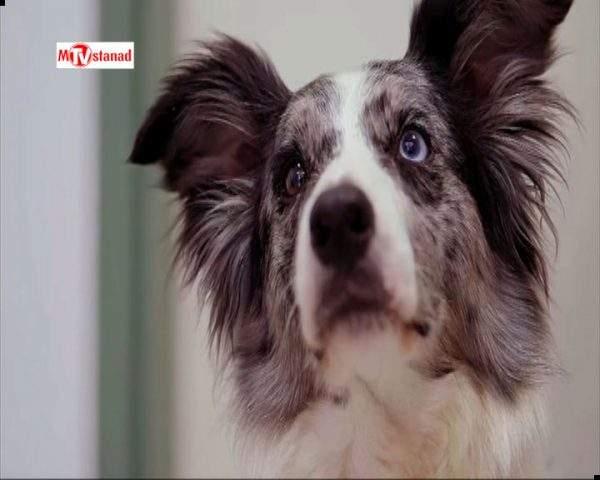 دانلود مستند خلوت سگها - 7 از مجموعه خلوت سگها