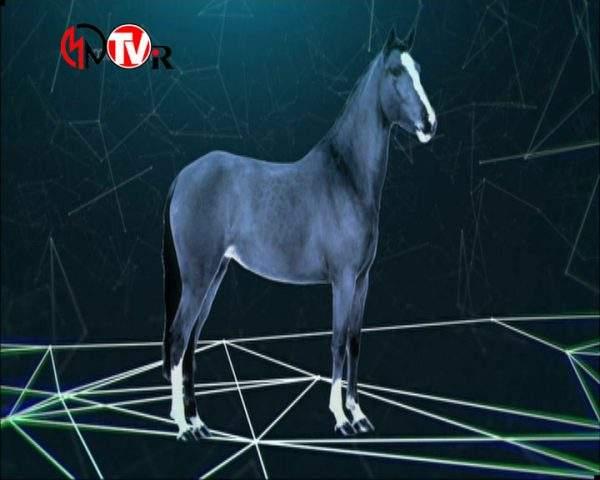 دانلود مستند نیروی انقلابی اسب از مجموعه انسان، زمین، جهان