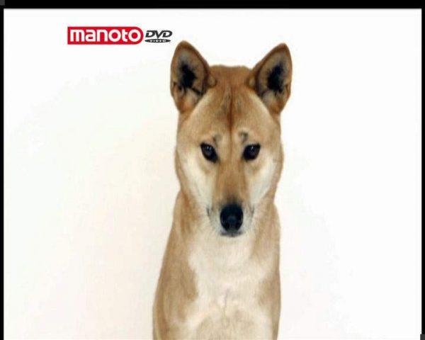 دانلود مستند دنیای سگ ها 4 - 2 از مجموعه دنیای سگ ها