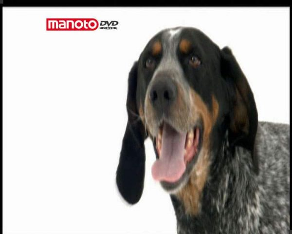 دانلود مستند دنیای سگ ها 4 - 3 از مجموعه دنیای سگ ها