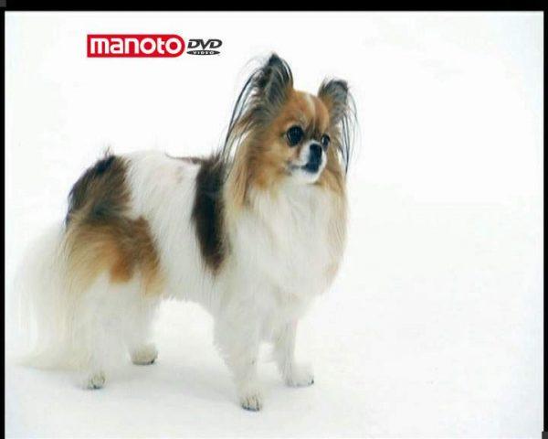 دانلود مستند دنیای سگ ها 4 - 4 از مجموعه دنیای سگ ها