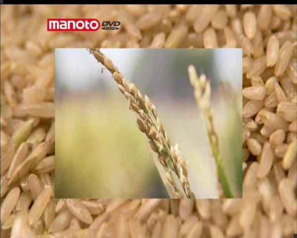 دانلود مستند برنج از مجموعه شگفتی های دنیای امروزی