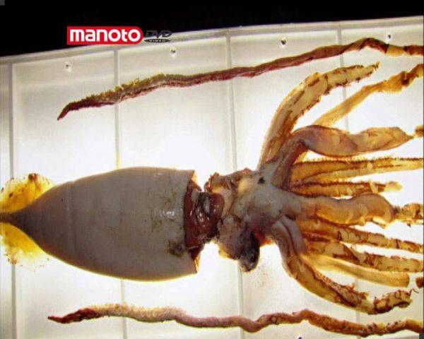 دانلود مستند ماهی مرکّب از مجموعه زیر پوست حیوانات