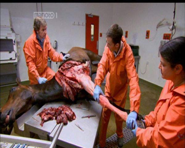 دانلود مستند اسب مسابقه از مجموعه زیر پوست حیوانات