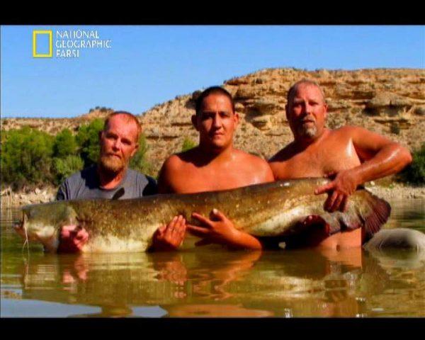 دانلود مستند ماهیگیری با دست از مجموعه در دام قلاب
