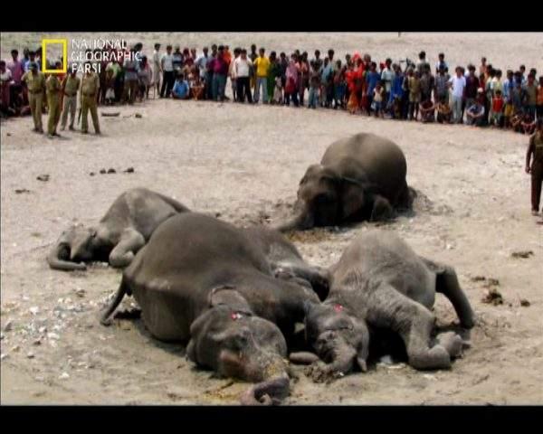 دانلود مستند گورستان فیل ها از مجموعه درندگان