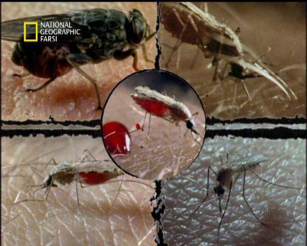 دانلود مستند حشرات پرنده از مجموعه قاتلین بالفطره