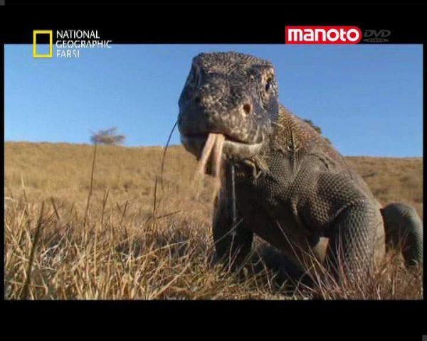 دانلود مستند اژدهاهای مرگ بار از مجموعه حیات وحش
