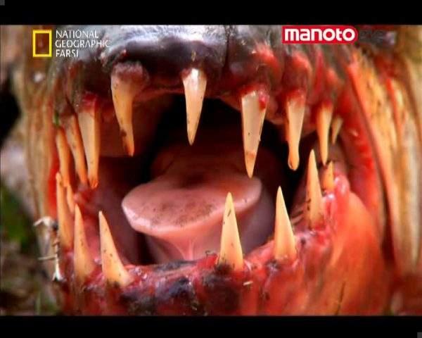 دانلود مستند هیولای ماهی کنگو از مجموعه حیات وحش