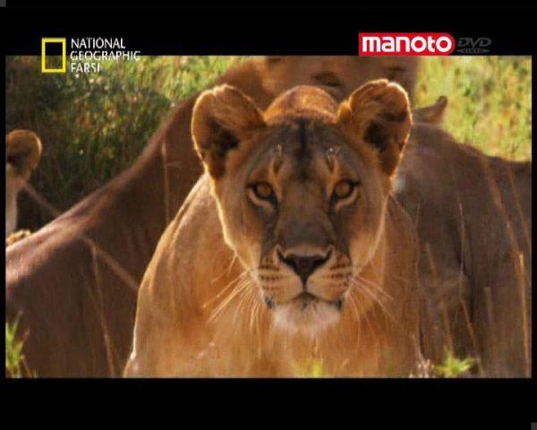 دانلود مستند شکارچیان برتر از مجموعه حیات وحش