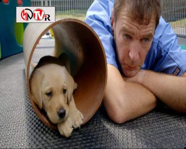 دانلود مستند خلوت سگها - 1 از مجموعه خلوت سگها