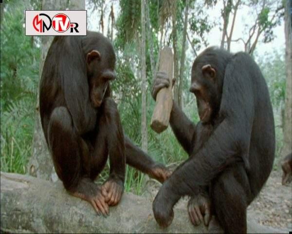 دانلود مستند حیوانات چگونه فکر می کنند - 2 از مجموعه حیوانات چگونه فکر می کنند