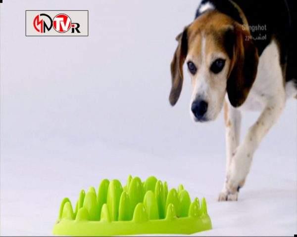 دانلود مستند خلوت سگها - 2 از مجموعه خلوت سگها