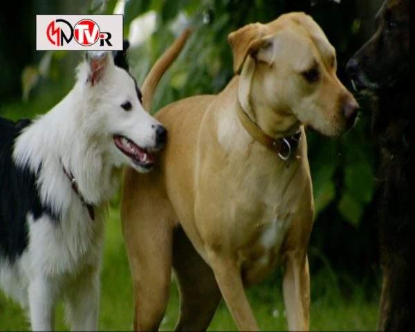 دانلود مستند خلوت سگها - 4 از مجموعه خلوت سگها