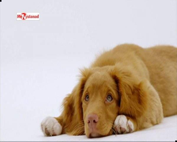 دانلود مستند خلوت سگها - 5 از مجموعه خلوت سگها