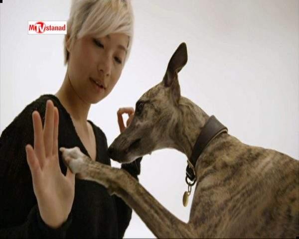 دانلود مستند خلوت سگها - 6 از مجموعه خلوت سگها