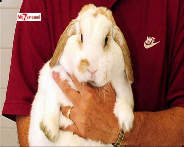 دانلود مستند حیوانات چاق - 5 از مجموعه حیوانات چاق