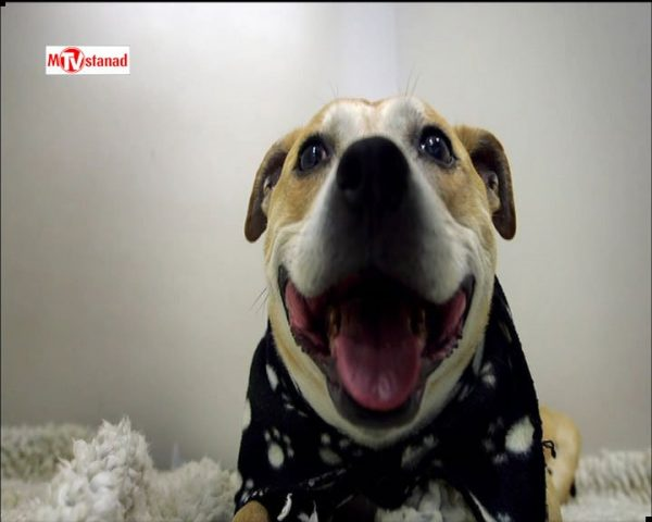 دانلود مستند سوپر کلینیک حیوانات - 6 از مجموعه سوپر کلینیک حیوانات