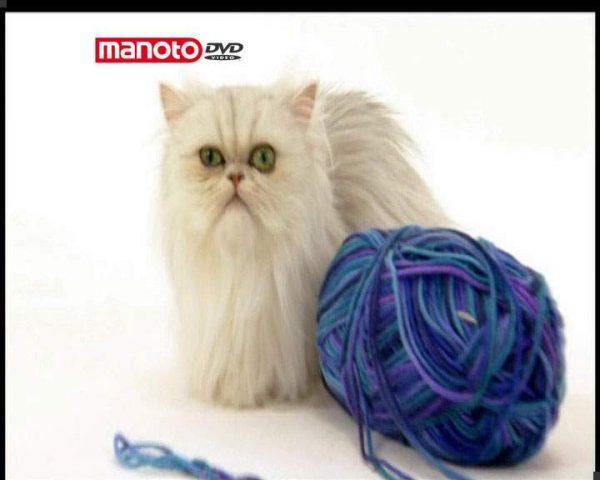 دانلود مستند دنیای گربه ها - 1 از مجموعه دنیای گربه ها
