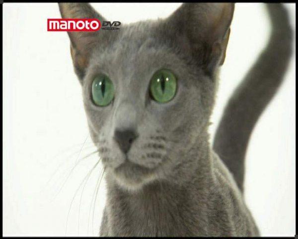 دانلود مستند دنیای گربه ها - 3 از مجموعه دنیای گربه ها