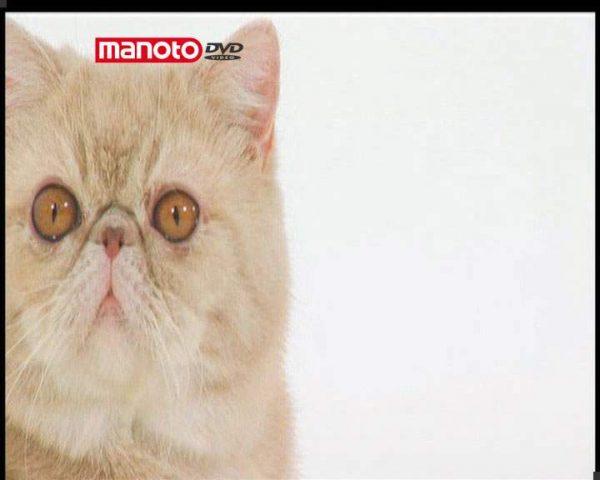 دانلود مستند دنیای گربه ها - 4 از مجموعه دنیای گربه ها