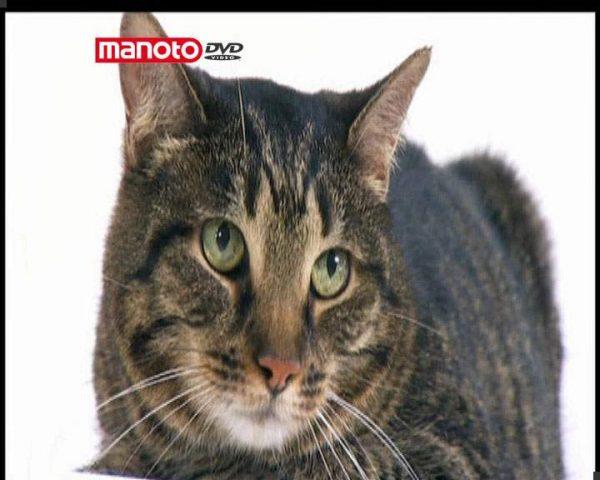 دانلود مستند دنیای گربه ها - 5 از مجموعه دنیای گربه ها