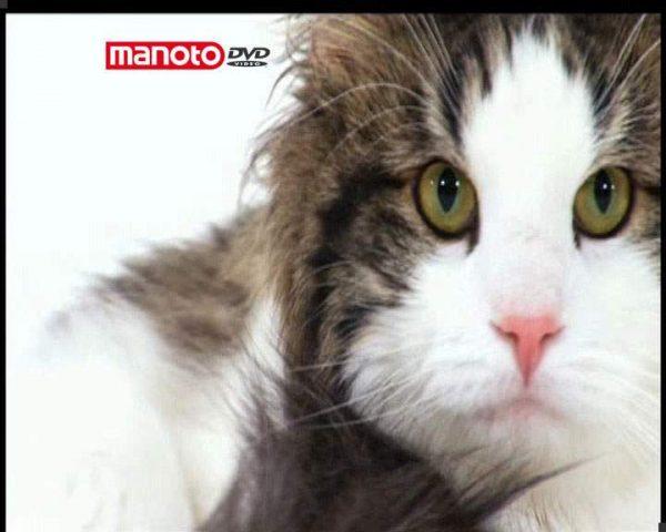 دانلود مستند دنیای گربه ها - 6 از مجموعه دنیای گربه ها