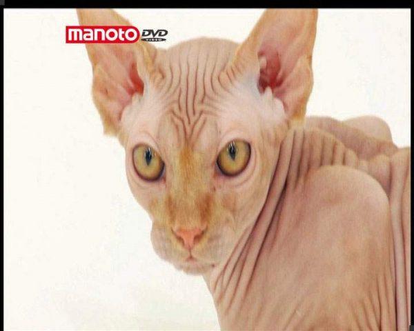دانلود مستند دنیای گربه ها - 8 از مجموعه دنیای گربه ها