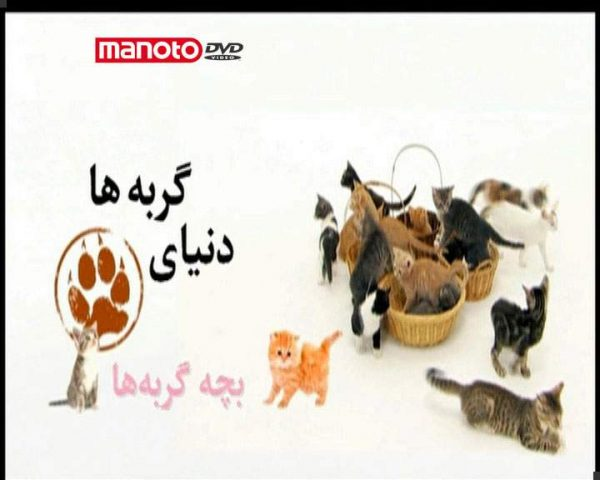 دانلود مستند بچه گربهها از مجموعه دنیای گربه ها