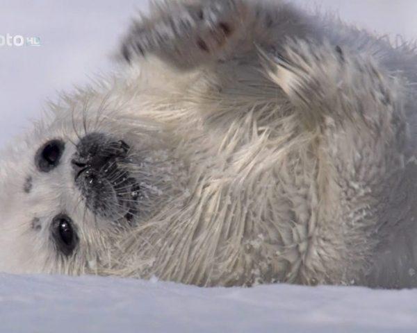 دانلود مستند دنیای بچه های حیوانات با دوبله فارسی شبکه منوتو