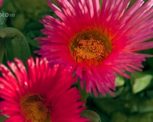 دانلود مستند زیبایی فصل ها با دوبله فارسی شبکه منوتو