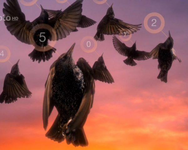 دانلود مستند زندگی در آسمان با دوبله فارسی شبکه منوتو