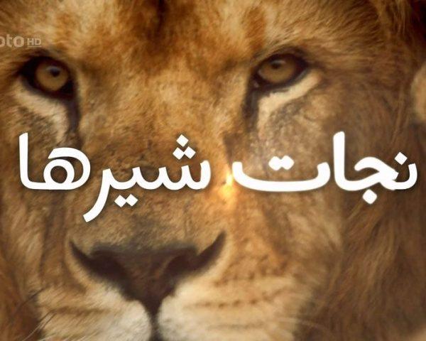 دانلود مستند نجات شیرها با دوبله فارسی شبکه منوتو