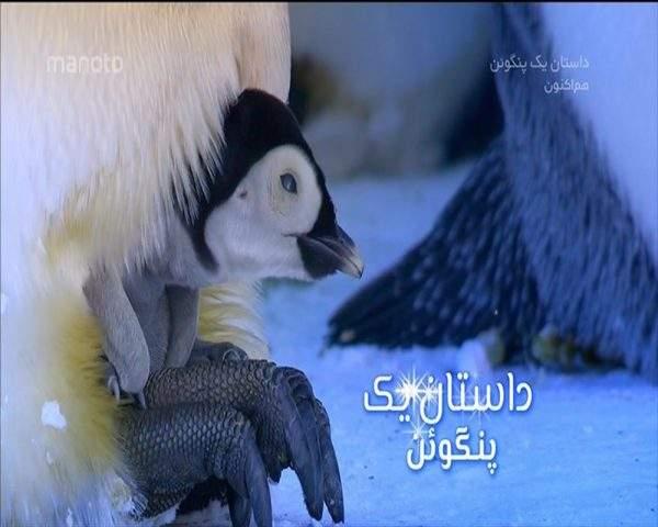 دانلود مستند داستان یک پنگوئن با دوبله فارسی شبکه منوتو