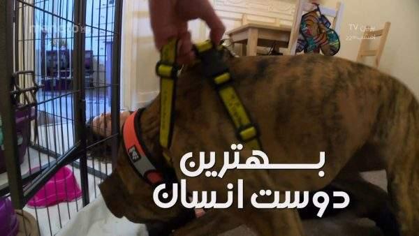 دانلود مستند بهترین دوست انسان با دوبله فارسی شبکه منوتو