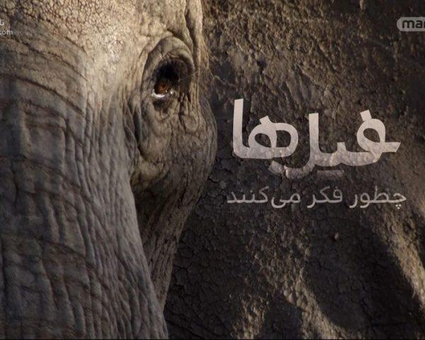 دانلود مستند فیلها چطور فکر میکنند با دوبله فارسی شبکه منوتو