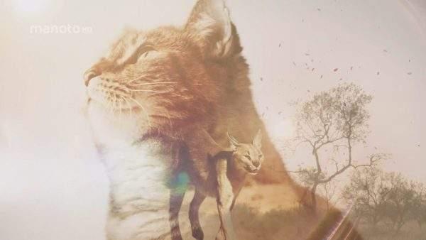 دانلود مستند از گربه تا ببر – ۱ و ۲ با دوبله فارسی شبکه منوتو