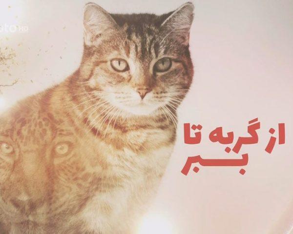 دانلود مستند از گربه تا ببر - 1 و 2 با دوبله فارسی شبکه منوتو