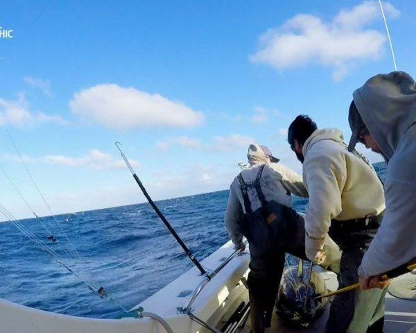 دانلود مستند به امید شکار ماهی تن با دوبله شبکه نشنال جئوگرافی فارسی از مجموعه ماهی تن شرور