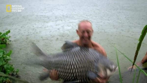 دانلود مستند ماهی قرمز عظیم الجثه با دوبله شبکه نشنال جئوگرافی فارسی از مجموعه ماهی غول پیکر