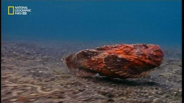 دانلود مستند قاتلان زیر آب با دوبله شبکه نشنال جئوگرافی فارسی از مجموعه مرگبارترین های دنیا