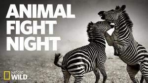 شب نبرد حیوانات