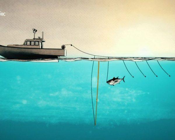 دانلود مستند آب های بی رحم با دوبله فارسی شبکه نشنال جئوگرافی از مجموعه ماهی تن شرور