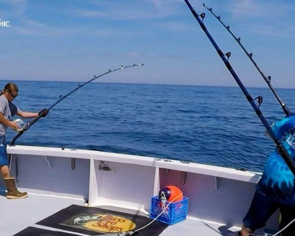 دانلود مستند از بدترین تا بهترین از مجموعه ماهی تن شرور