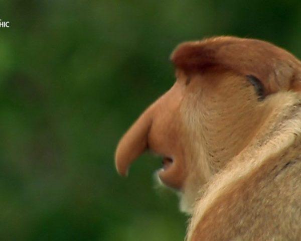 دانلود مستند جهان گمشده پاپوا از مجموعه حیات وحش اندونزی