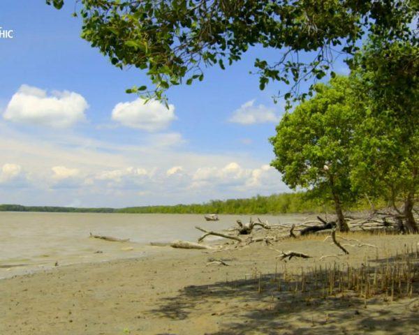 دانلود مستند جزیره ی هیولاها از مجموعه حیات وحش اندونزی