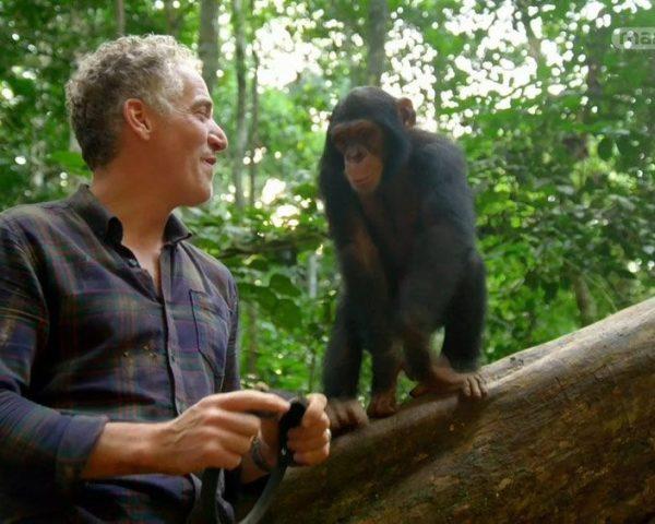 دانلود مستند حیوانات فیلمبردار از مجموعه ویژه برنامه
